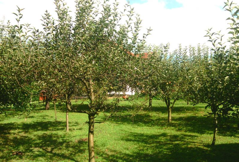 Screenshot-2018-5-4 Slatina-Banja Luka(9)